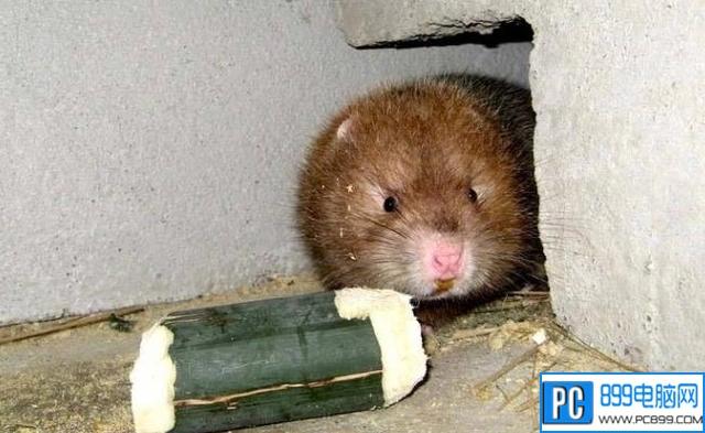 网络流行语卖竹鼠是什么梗