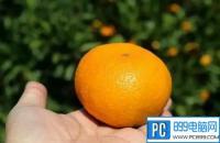 网络语言我去买几个橘子是什么梗
